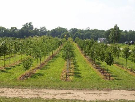 General Nursery 2006 Planting